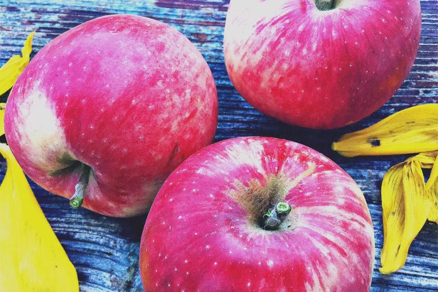 love apple